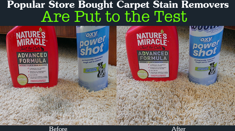 Clean Dog Vomit Sn From Carpet - Carpet Vidalondon